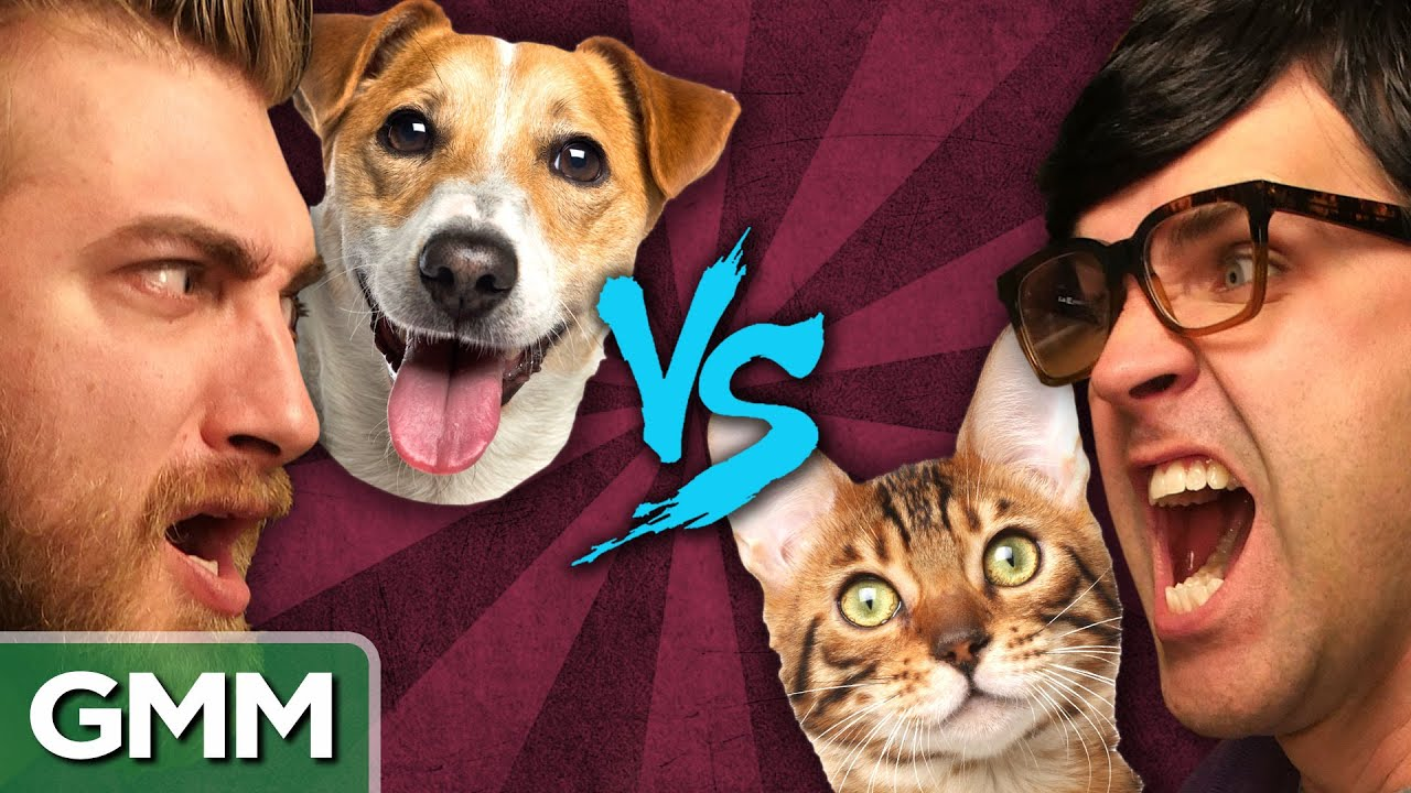 Gmm Dogs Vs Cats