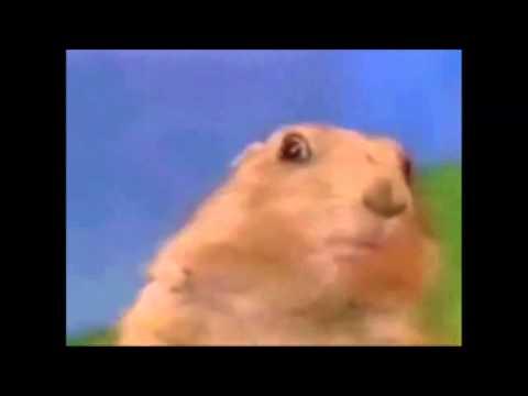 Dramatic Chipmunk vs Shocked Squirrel