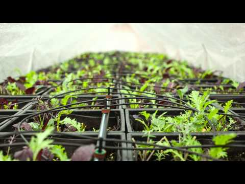 FEEDING THE FUTURE New York City's Experiment in Urban Agriculture Part 1: Grow