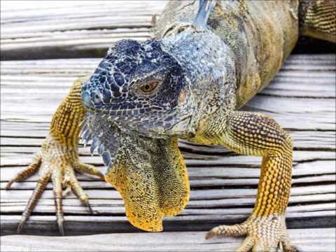 ZF2NH Grand Cayman Island. From dxnews.com