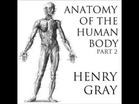 Anatomy Of The Human Body Full Audiobook Part 14 Of 39 Youtube