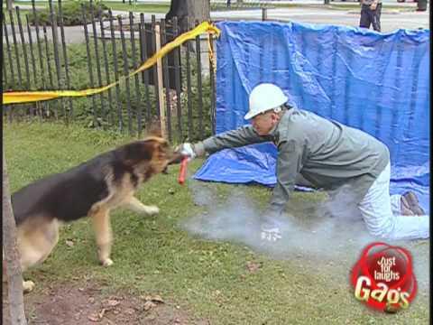 Dynamite Dog Prank