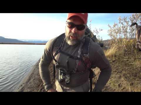 Caribou & Moose Hunt Bettles Alaska