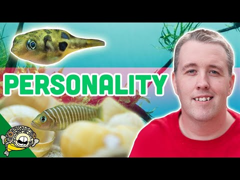 SMALL Fish With BIG Personality! 10 Gallon Aquarium Ideas