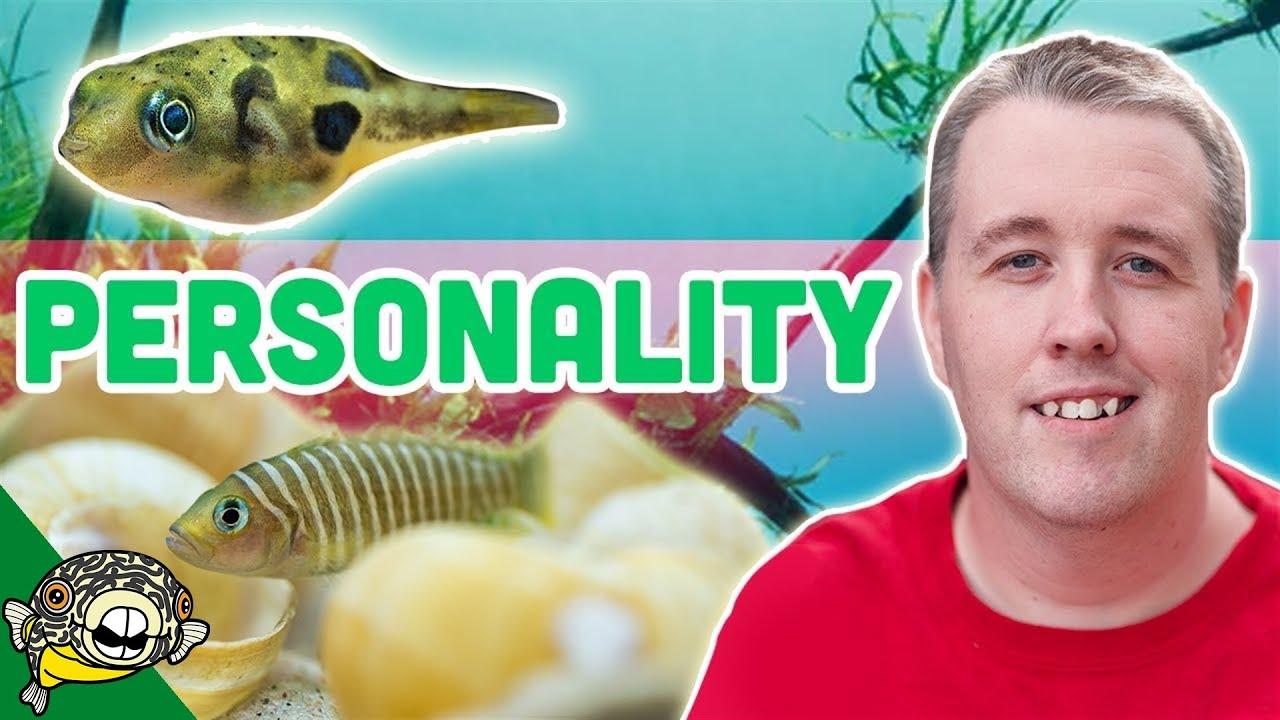 small-fish-with-big-personality-10-gallon-aquarium-ideas
