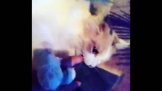 Кошка которая любит людей грызть)))#кошки#дом#москва
