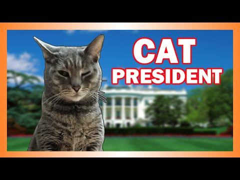 Frisky the Presidential Player (Cat President)