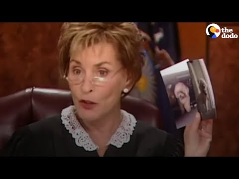 Judge Judy Lets Dog Decide Who To Go Home With  | The Dodo