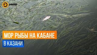 Массовый замор рыбы произошёл на озере Средний Кабан в Казани
