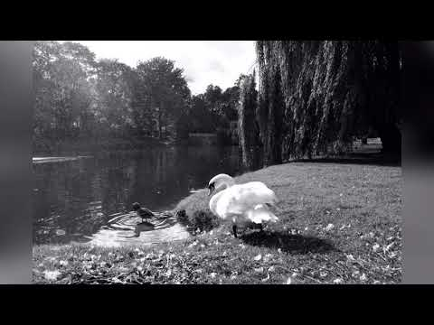 Autumn In Poland(Original) Rie Matsushita Trio