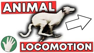 Animal Locomotion - Objectivity #137