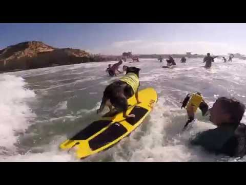 Dog in Surf Competition - Watch the Pro Surfing Dog!