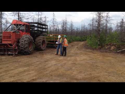 TreePlanting in Canada