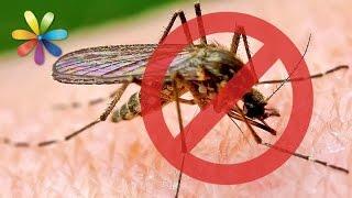 видео Как избавиться от укусов комаров за 5 минут