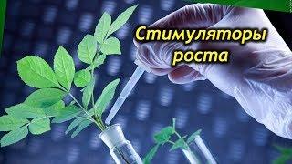 видео Домашние растения — советы цветоводу: 10 советов