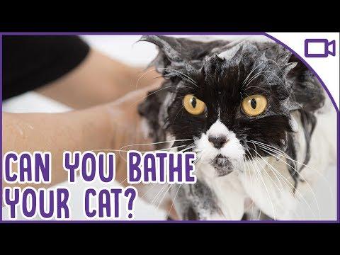 Can You Bathe A Cat? Cat Hygiene 101!