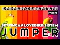 Settingan Lovebird Fighter Sistem Jemper Jumper Tandem Tempel Jejer  Mp3 - Mp4 Download