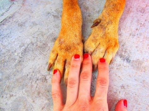 Dog Rescue - Kallie the Angel