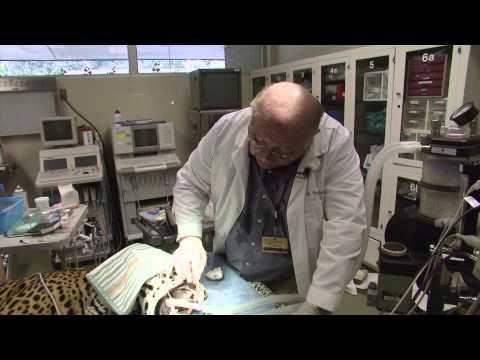 Kentucky Farm Bureau's Bluegrass & Backroads: Zoo Dentist Thomas Clark