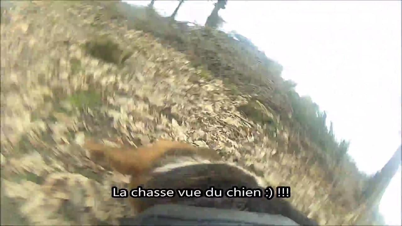 Chasse sanglier 2017 chien au ferme sur sanglier !!! avec
