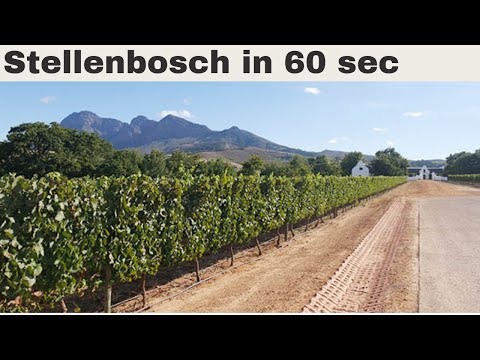 Stellenbosch in 60 seconds: discover the wine route in South Africa