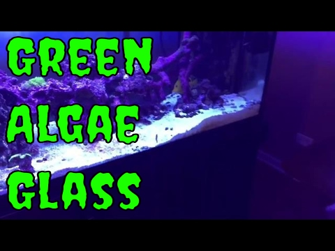 reef tank news - green algae on glass - puppy rescue