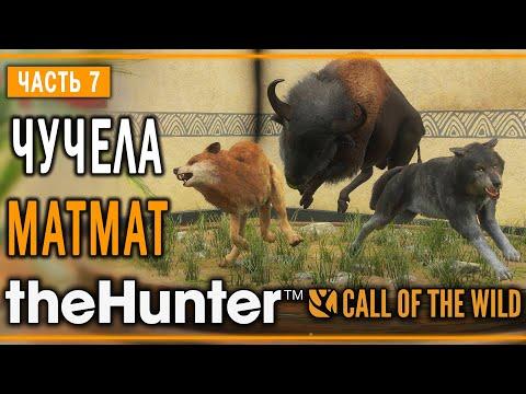 TheHunter Call Of The Wild #7 🐺 - Дерзкий Бизон - Кoмпозиции из Чучeл