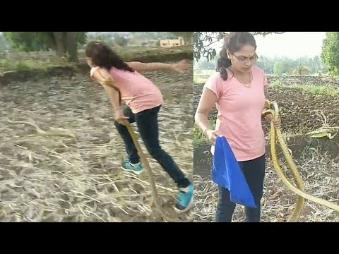 Snake Rescue In A Saree: Watch The Viral Video That Has The ...