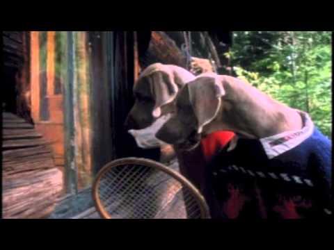 William Wegman  - The Hardly Boys