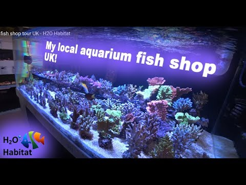 My Local Aquarium Fish Shop Tour UK - H2O Habitat
