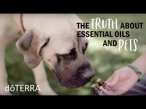 the-truth-about-using-essential-oils-on-your-pets