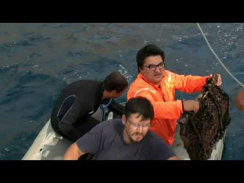 DEU IMST Marine Living Resources Programme