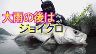 ジョイクロはやっぱり凄かった【日本海リバーシーバス】 thumbnail
