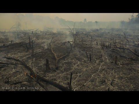 Fire & Smoke in the Brazilian Amazon
