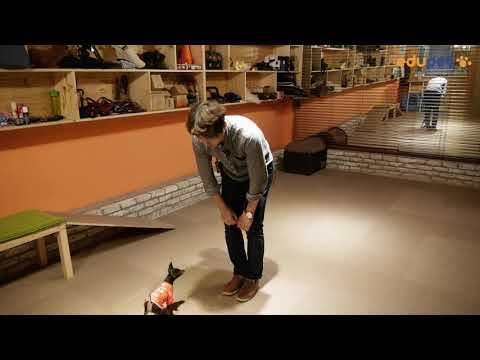 반려견 기초 교육, 이름부르면 다가와서 앉아 시선 마주하기 - dog training, clicker training