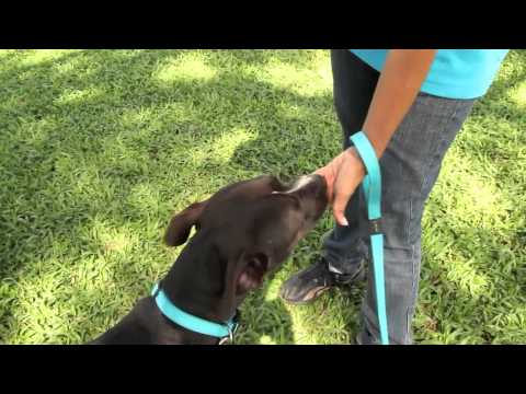 Dog 101 Management Tips Topic 15 - Easy TV Dog Tricks To Teach Your Dog
