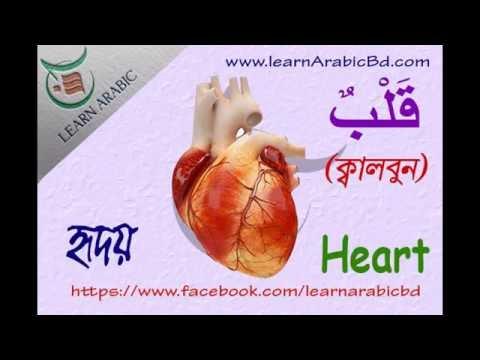 Learn arabic Vocabulary -1