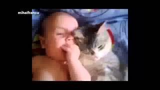 Dogs and cats protecting babies - Cute animal compilation