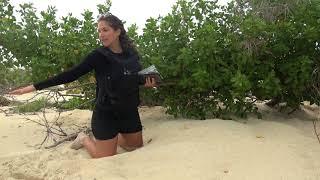 Sea Shepherd Op Jairo Caribbean - Day Patrol