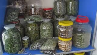Дары леса. Обзор моей зеленой аптеки.