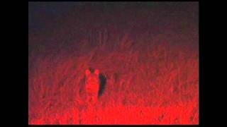 Video GREAT TIPS FOR BOBCAT HUNTING download MP3, 3GP, MP4, WEBM, AVI, FLV Agustus 2017