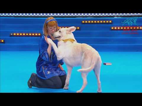 World Dog Show 2016 (день 3)