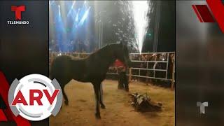 Famosos ARV: José Manuel Figueroa cae de caballo, Chiquis Rivera podría esperar hijo y más