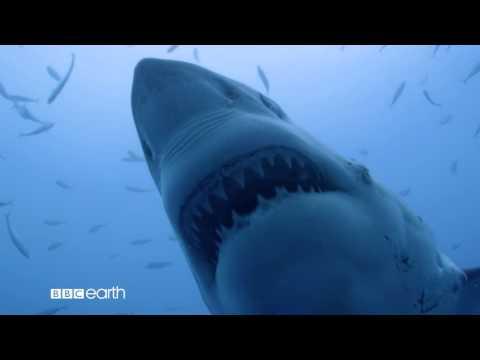 Shark.  Starts Sunday at 5pm (SIN/HK)