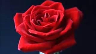 篠原涼子の代表曲 恋しさと さつなさと 心強さと エレクトーンカバーです.