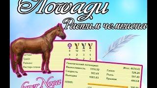 Лоwади | Как я качаю лошадь? | Растим чемпиона