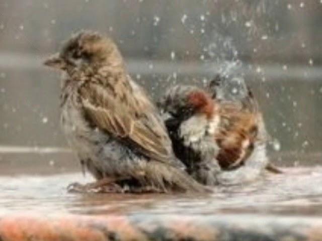 Изображение предпросмотра прочтения – АннаПолякова читает произведение «Весенний дождь» А.А.Фета