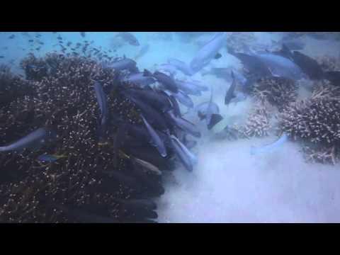 Snorkelling off Monkey Beach (Great Keppel Island)