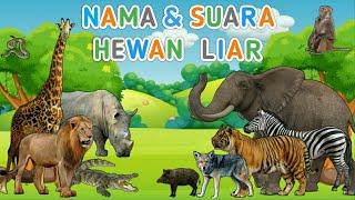 Nama dan suara binatang untuk anak anak | Hewan Liar | suara binatang animasi