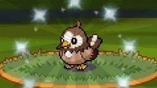 FULL ODDS SHINY POKEMON ALREADY!?   Pokemon Diamond & Pearl Versus Royale - 01